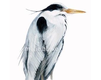 Grey Heron - fine art print, botanical print, watercolour bird print