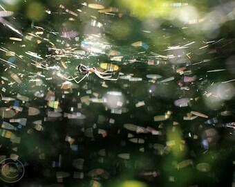 """Spider in Web 9"""" X 12"""" Fine Art Nature Photography, Golden Garden Spider, Disco"""