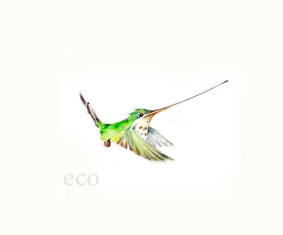 8x10 inch PRINT from the ORiGINAL Hummingbird watercolor  painting