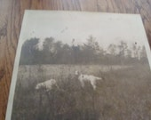Hunting dogs photo