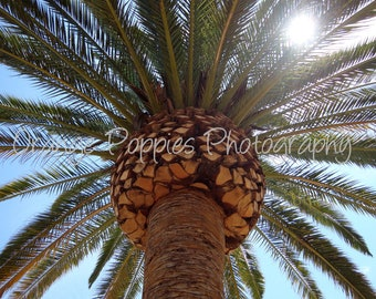 Palm Tree Photograph *choose your size*