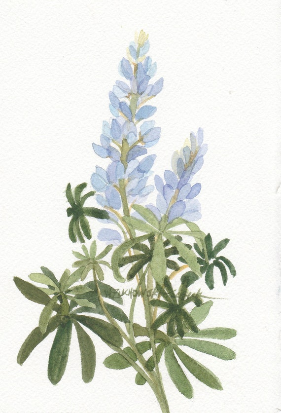 Blue Lupine Original Watercolor Painting 5 x 7