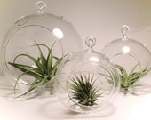 Make your Own Terrarium or Container-  One Glass Globe- Large // Home Decor //