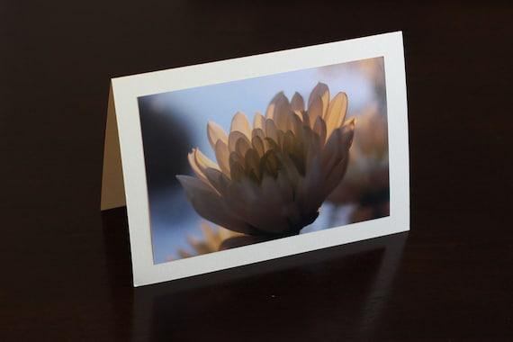 Chrysanthumum photo greeting card - get well card - birthday card - sympathy card - anniversary card - wedding card