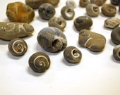 thirty snail fossils