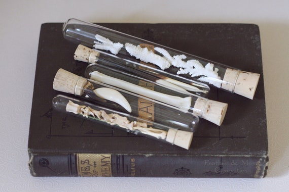 Natural history collection in test tubes.