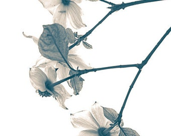 "Dogwood in the Spring 8""X12"" photograph."