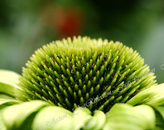 Lightly Green Fine Art Photograph Photoprint Macro Flower