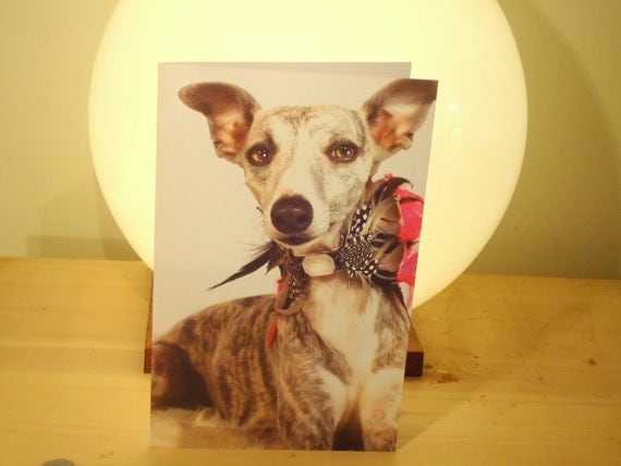 Six  blank Greeting card size 5 inch by 7 inch long to send to fellow Pet lovers.