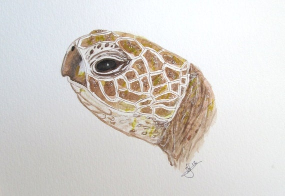 Original watercolor print Loggerhead Sea Turtle