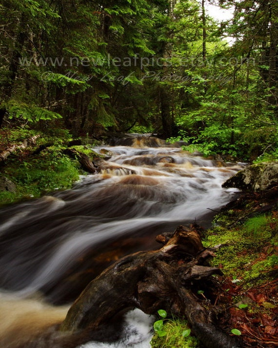 Maine woodland stream, Acadia landscape print, nature photography, green and brown, 8x10 fine art print