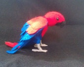 Female Eclectus for Casey May