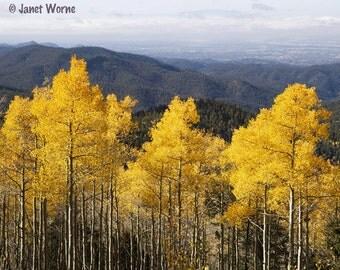 Aspen Gold in the Sangre de Cristo Mountains, fine art photograph
