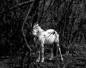 White horse mystic photography. Original animal nature forest trees secret black and white photo/ Unicorn. Wall Art Home decor 10x15
