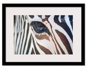 A Love of Stripes Photo / 20x30 / Free Shipping