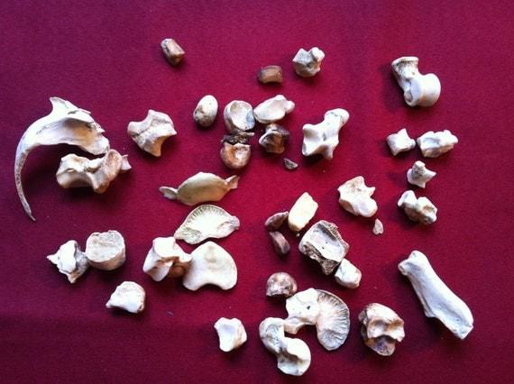 Lot of 40 Bone Pieces / Fragments