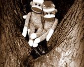 Sock Monkey Art - Best Friends - Photograph - Nursery, Playroom, Humor, Whismical Art 11x14