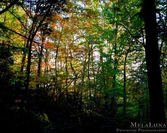 Fall Tree Photography Nature Decor, Rainbow Sunshine Autumn Asheville Fine Art Photo PRINT Blue Ridge Mountains, Fall Photo Landscape