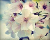 Flower Photography Cherry Blossoms Spring Nature Shabby Chic Wedding Decor Floral Botanical Art Pale Pastel Pink Blue Vintage Macro Garden