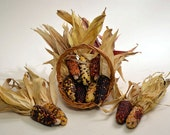 Mini Indian Corn, twelve (12) pieces, 4 inches to 5 inches; dried colored corn, fall decoration, rustic fall decor