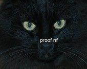 The Mysterious Green-Eyed Black Cat Photograph