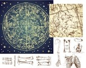 Human Skeleton, Bones and Celestial Map, Zodiac Constellations Astronomy Stars Sky Astrology Charts, Personal and Small Commercial Use