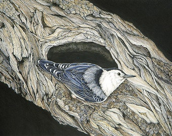 White-breasted Nuthatch Blank Greeting Card Set of Six