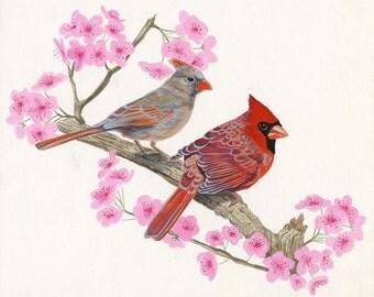 Cardinals . 8.5 x 11 art print