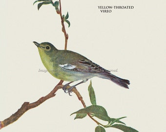 Bird Fabric Block - Yellow Throated Vireo - Repro from Prang 1889 Image