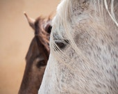 Horse home decor, equine art, horse photography, summer colors, rustic art, 10x8, 12 x 8, 11x14, 18x12