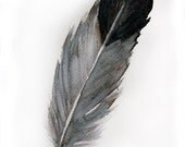 Watercolored feather-Original art watercolor painting of feather-Feather painting 7.5/11 inch