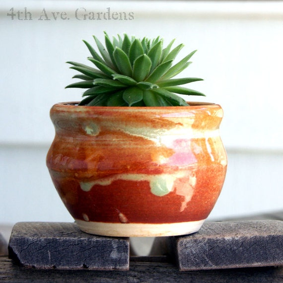 Kelly - An Exuberant Succulent In One-of-a-Kind Mini Hand Thrown Planter