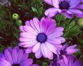 Fine Art Photo Print - purple flowers, nature photography, dreamy image, original color photo, 8x8