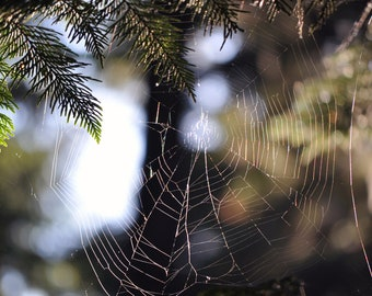 Spider web photo, Black, white, green and yellow, 8 x 10 fine photography print, Vacant Web