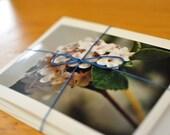 Flowers Notecard Set