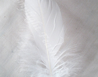 Goose Shoulder Feathers, soft and flexible per strung foot (about 100 feathers)