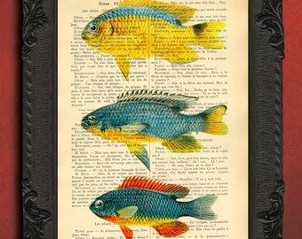 fish wall decor colorful fish altered art vintage blue fish illustration book print sea life dictionary page, nautical print