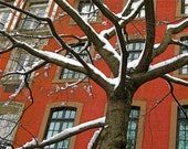 NYC Tree Snow Winter Christmas Holidays - 4x6 - Fine Art Photograph