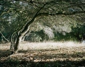 Fine Art Photography 8x8 print Landscape Nature, Tree with Light and Shadows wall art