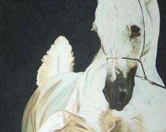 Arab Stallion Original Oil Painting on stretchered canvas by International artist Allen Richings