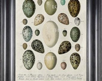 BIRD EGGS  Art Print C6 Beautiful Antique Bird Eggs Aqua White Golden Brown Chart Decoration Wall Hanging