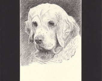 Clumber Spaniel Vintage Dog Print C.Francis Wardle Original 1935 Drawing Mounted with Mat