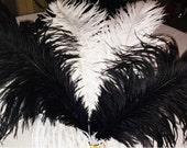 1 Premium Ostrich Feather - Black