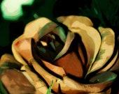 Mahogany Rose