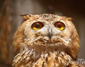 5x7 Photo Print Curious Owl with Yellow Eyes -Matte Finish Print, Fine Art Decor Photography, Wall Art