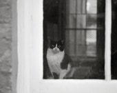 Cat in a Window 11x16 Photo Print, Animal and Pet Fine Art Photography - FrescaPhoto