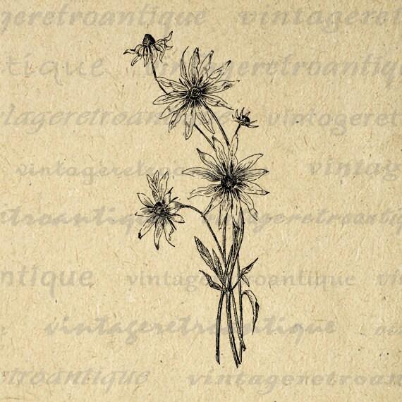 Digital Wild Flowers Graphic Download By Vintageretroantique