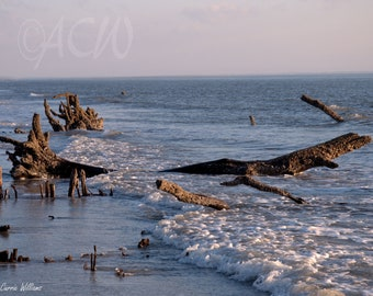 Bone Yard Beach on Hunting Island South Carolina 2 (PR) (canvas)