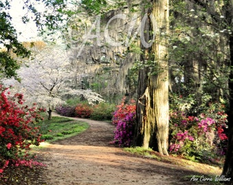 Garden path in full bloom in Edisto Memorial Gardens (PR) (canvas)