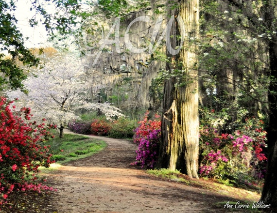 Garden path in full bloom in Edisto Memorial Gardens (PR) (canvas)